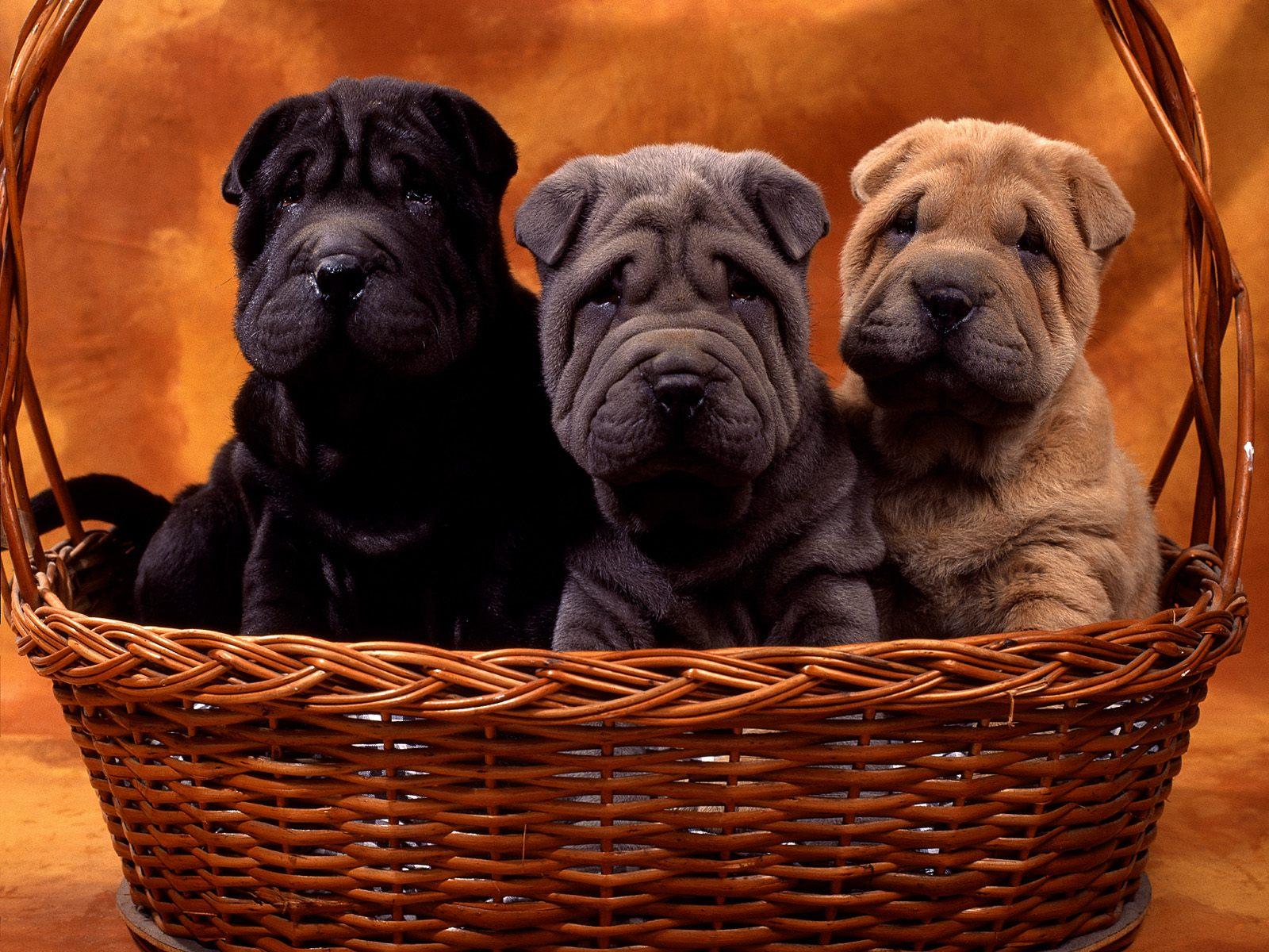 http://4.bp.blogspot.com/-_Pkd_VYJuh4/T3rmg-U9PdI/AAAAAAAAAgs/lpO57h-2N00/s1600/cute+pupies.jpg
