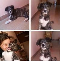 cane adozione sicilia