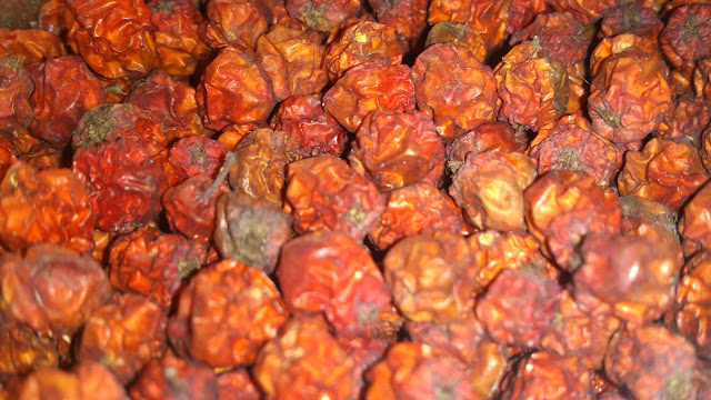 Rowanberry immune system