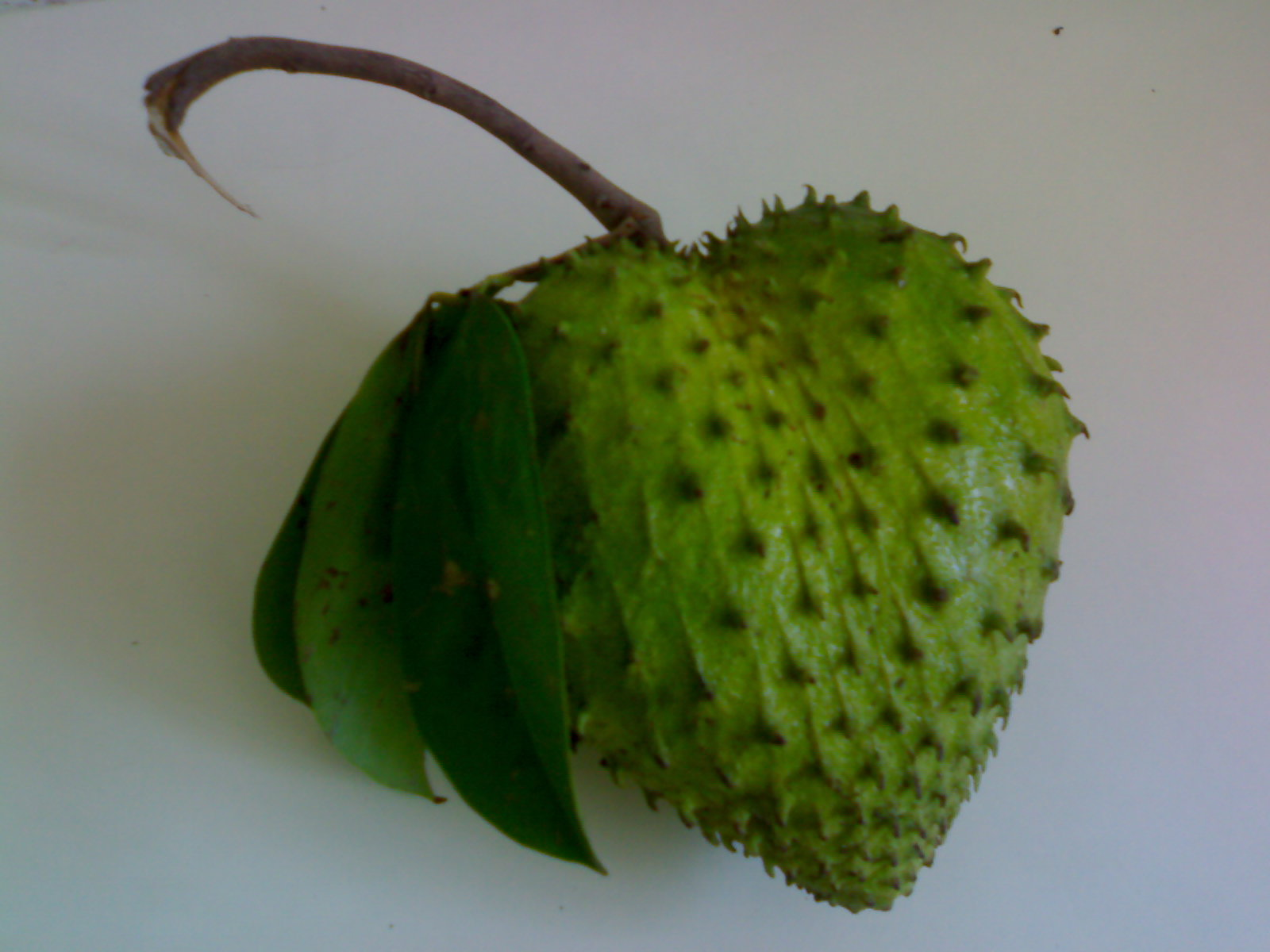 guyabano for cancer Soursop is the fruit of annona muricata, a broadleaf, flowering, evergreen tree the exact origin  in the philippines, it is called guyabano, derived from the spanish guanábana, and is eaten ripe,  the memorial sloan-kettering cancer center cautions, alkaloids extracted from graviola may cause neuronal dysfunction.