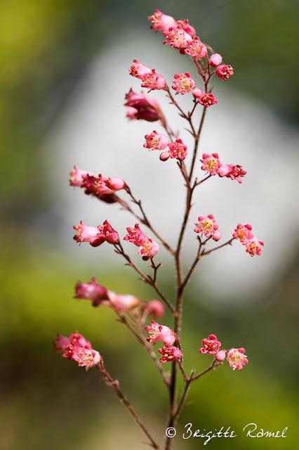 Variations sur thème de fleur, macro