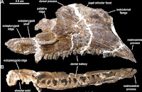 http://sciencythoughts.blogspot.co.uk/2013/09/a-new-lambeosaurine-dinosaur-from.html
