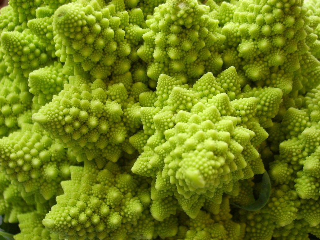 Images Of Fractals Images Of Everything