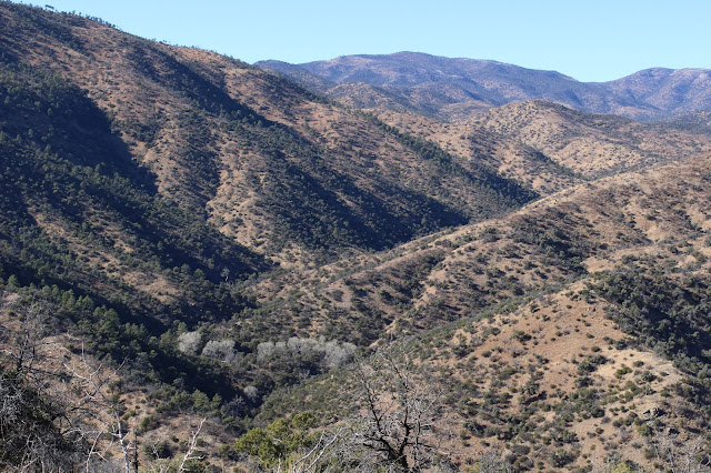 Hunting%2Bfor%2BCoues%2BWhitetail%2Bin%2BMexico%2Bwith%2Bguides%2BJay%2BScott%2Band%2BDarr%2BColburn%2B25.JPG