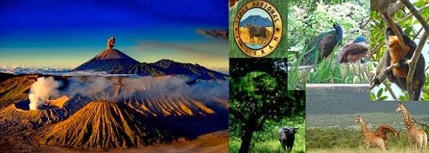 Mt Bromo, Baluran, Sukamade & Ijen Crater 5 Days 4 Nights Tour