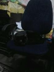 Черный кот на кресле