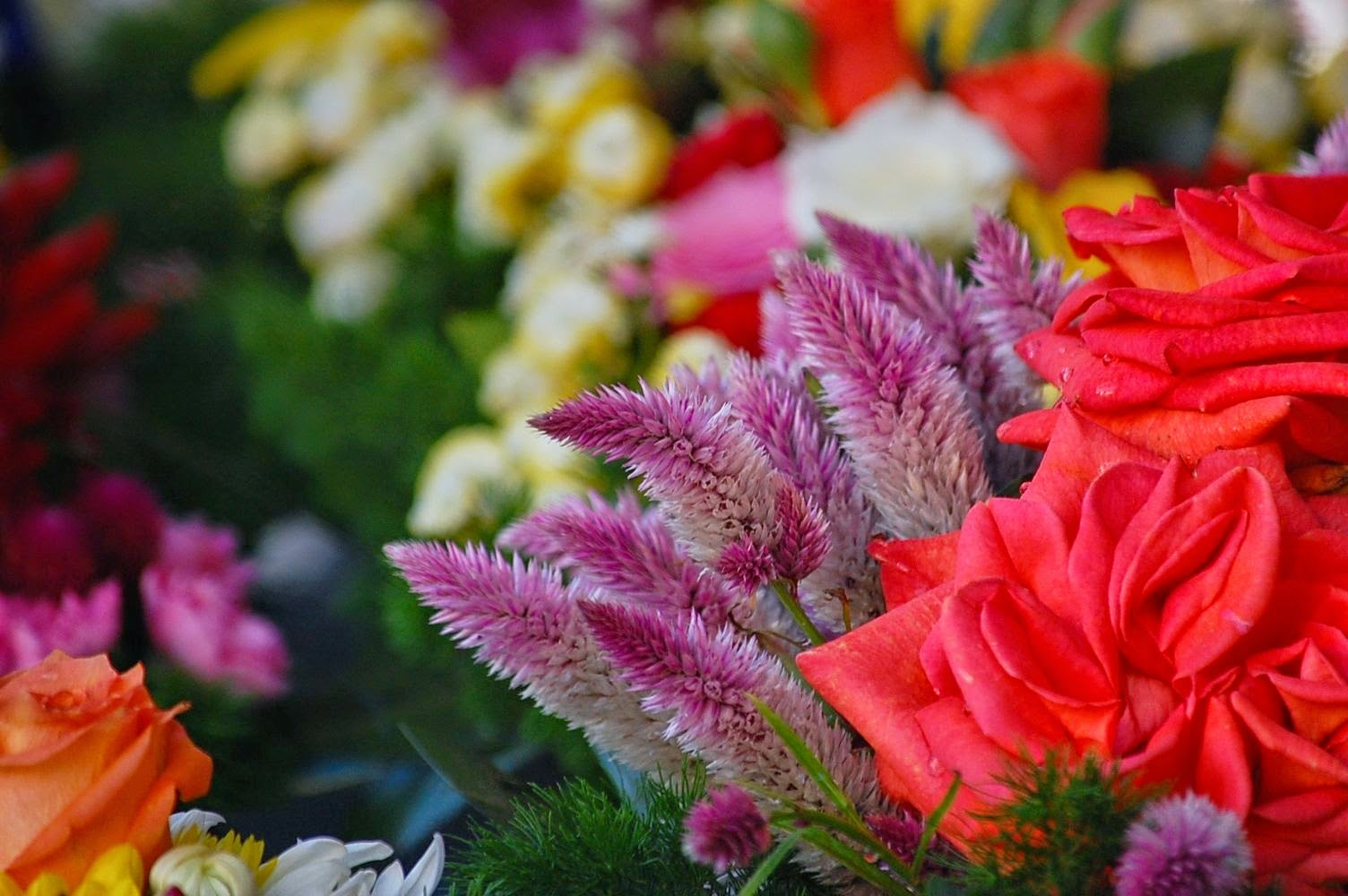 flowers campo di fiori rome italy