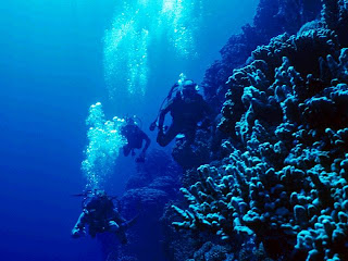 Inmersión en Columbretes