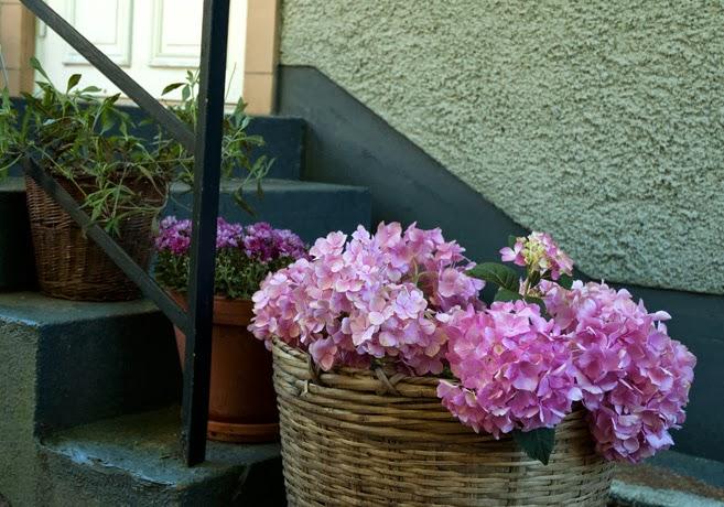 En grå utetrappa med blomkrukor på trappstegen.