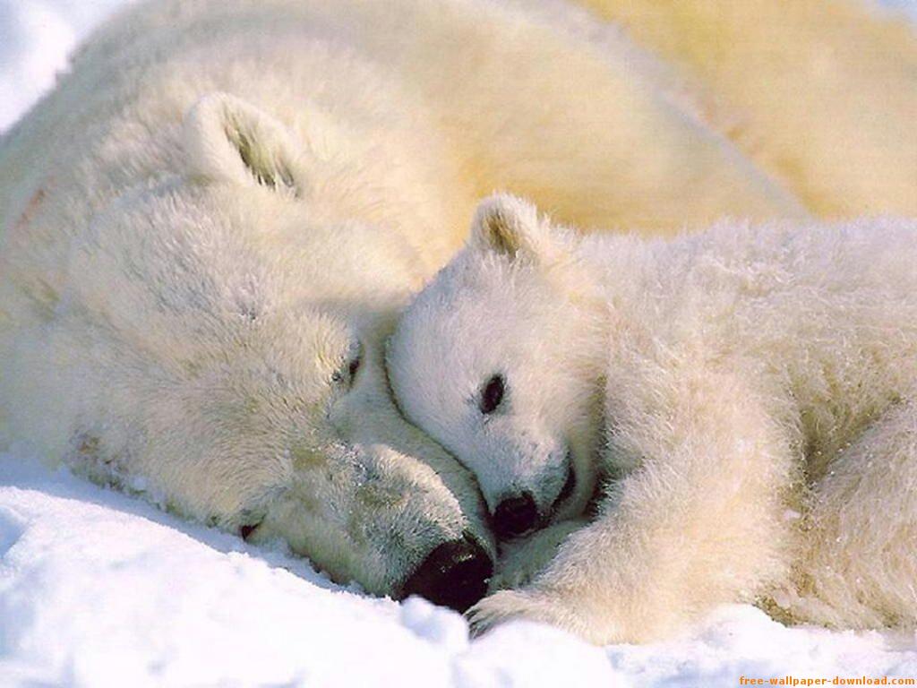 Antarctica: Animals