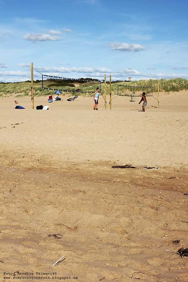 snäckor, halmstad, strand tylesand, kock off tylebäck, beach volley, stranden