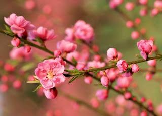 12星座必學妙招 催旺你的桃花