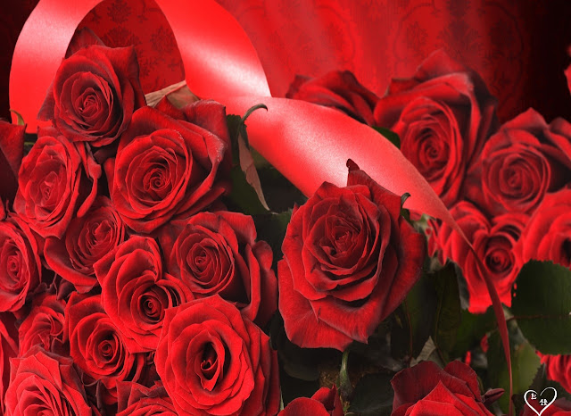 Red Roses Pictures