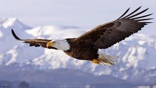 Keď sa niekto narodí s krídlami, mal by urobiť všetko pre to, aby ich používal. (F. Nightingal)