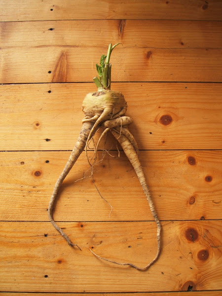 parsnips, allotment, root vegetable, vegetable, growing