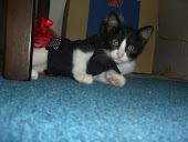 my cat ( OREO )