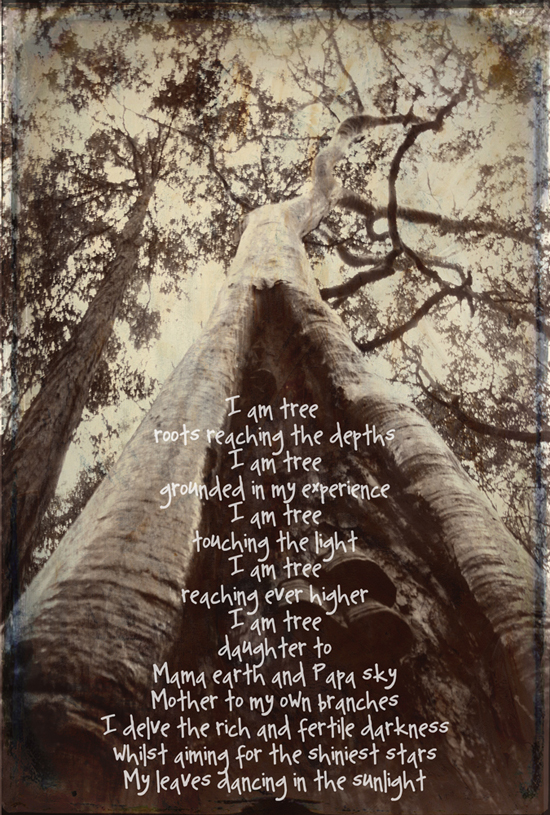 galia alena photography, tree, trunk