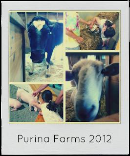 Dog Show Purina Farms
