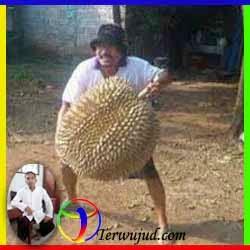 Durian-Mabuk