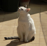 La mia gatta Lula!
