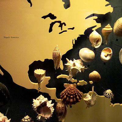 The World of Shells Fernbank Museum of Natural History