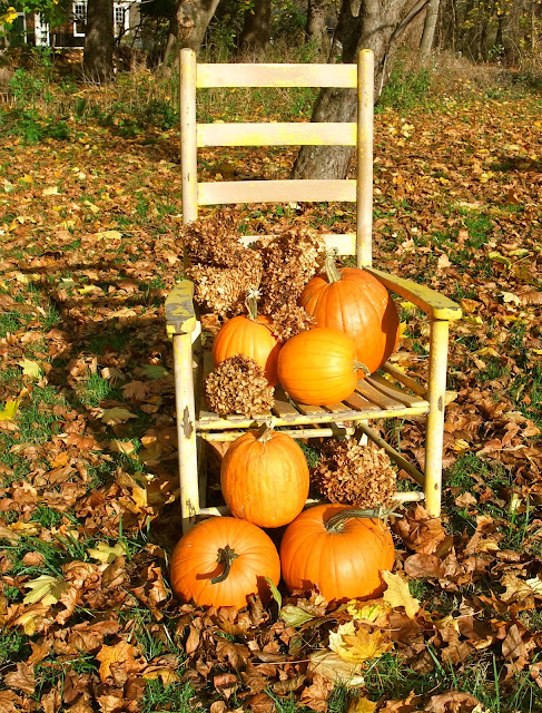 A PANOPLY OF PUMPKIN