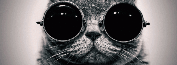 Cool-Cat-Facebook-Cover-620x229.png