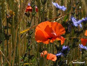 Link: Karens Natur Fotografier