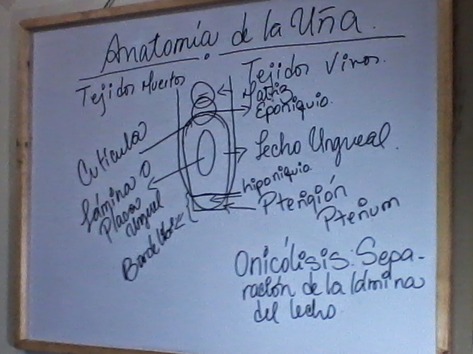 ESTETICA ACTUAL.. ACADEMIA ANADILIS REYES: PREPÁRATE EN EL MUNDO DE ...
