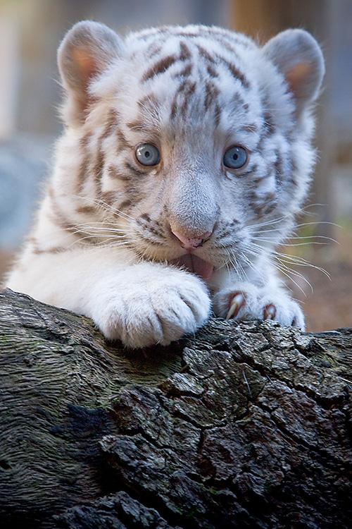Mundo Gaturro Grati$: animalitos tiernos