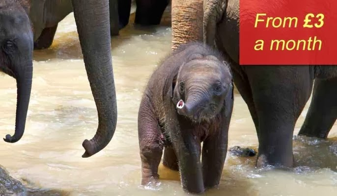 WWF Adopt An Elephant