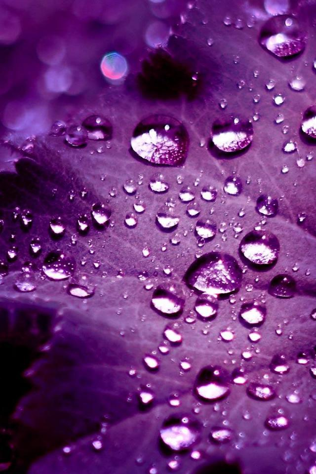 rain drop  HD Mobile Wallpapers For Your Smart Phone