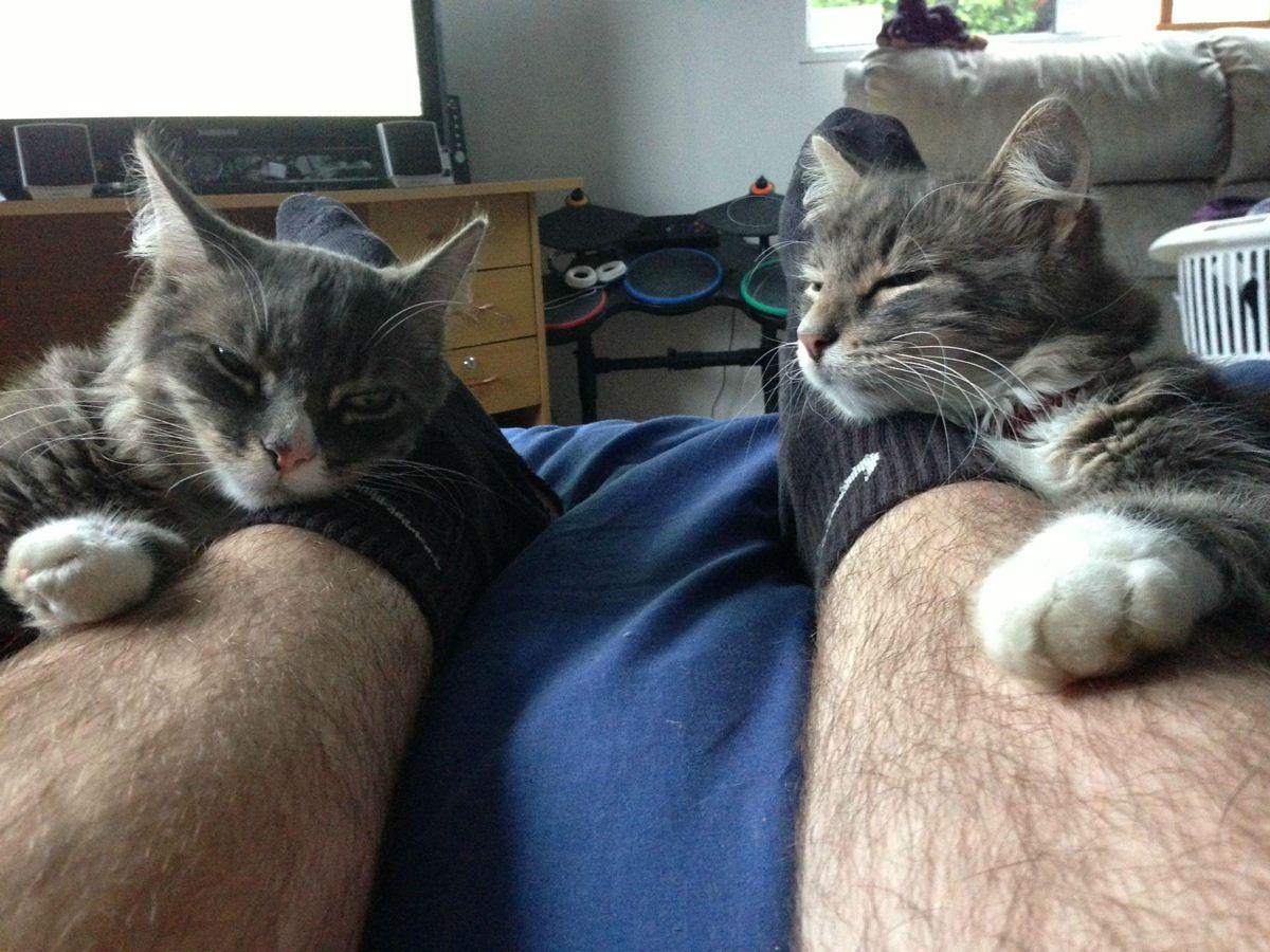 funny cat pics, cats photos, funny cats