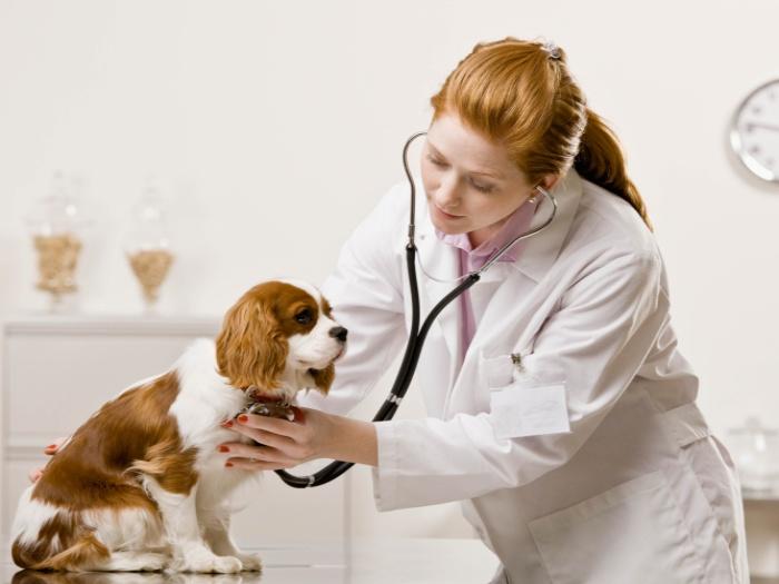 http://4.bp.blogspot.com/-_UQsb2PTo2o/TmoDHgPrwZI/AAAAAAAAAoM/aQ852S6JmVc/s1600/veterinario-5-think-TL.jpg
