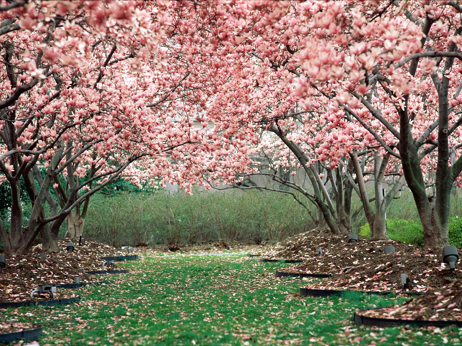 only nature spring wallpapers