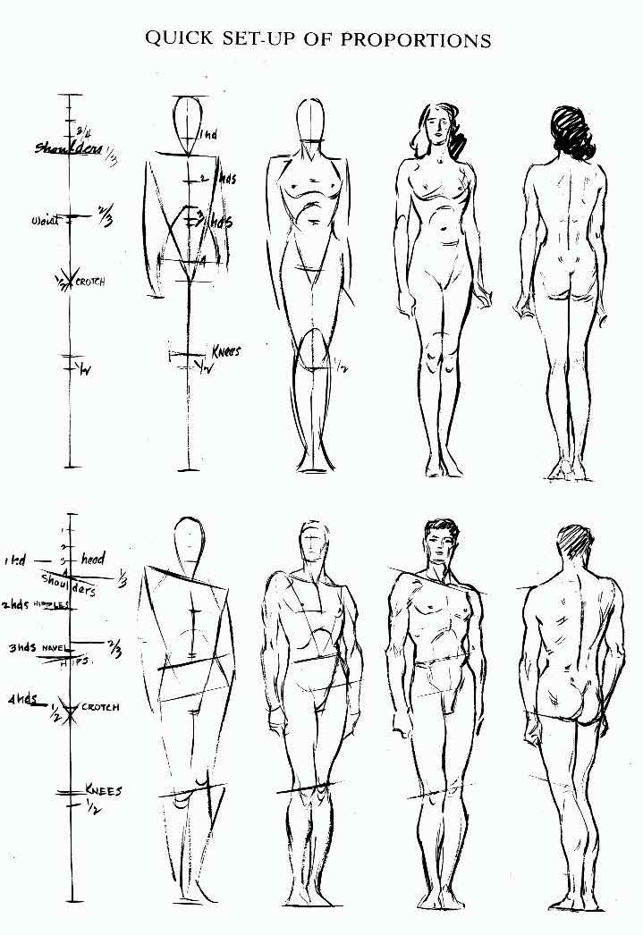 Human Anatomy Drawing Practice