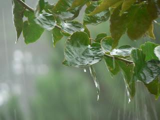 rain-the-smell-of-the-rainfall.jpg