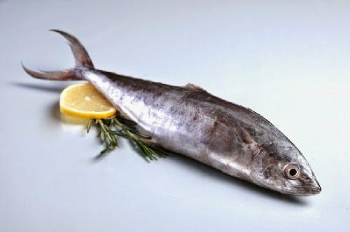 kandungan gizi ikan tenggiri