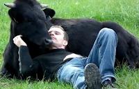 Fadjen e Christophe, amizade e gratidão de um touro salvo das touradas