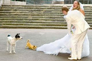 Funny Dog love on Bride