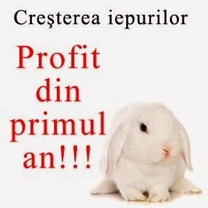Cresterea iepurilor, afaceri