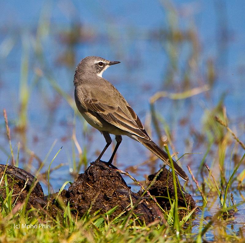 Mahikeng Birding Blog: Winter birding