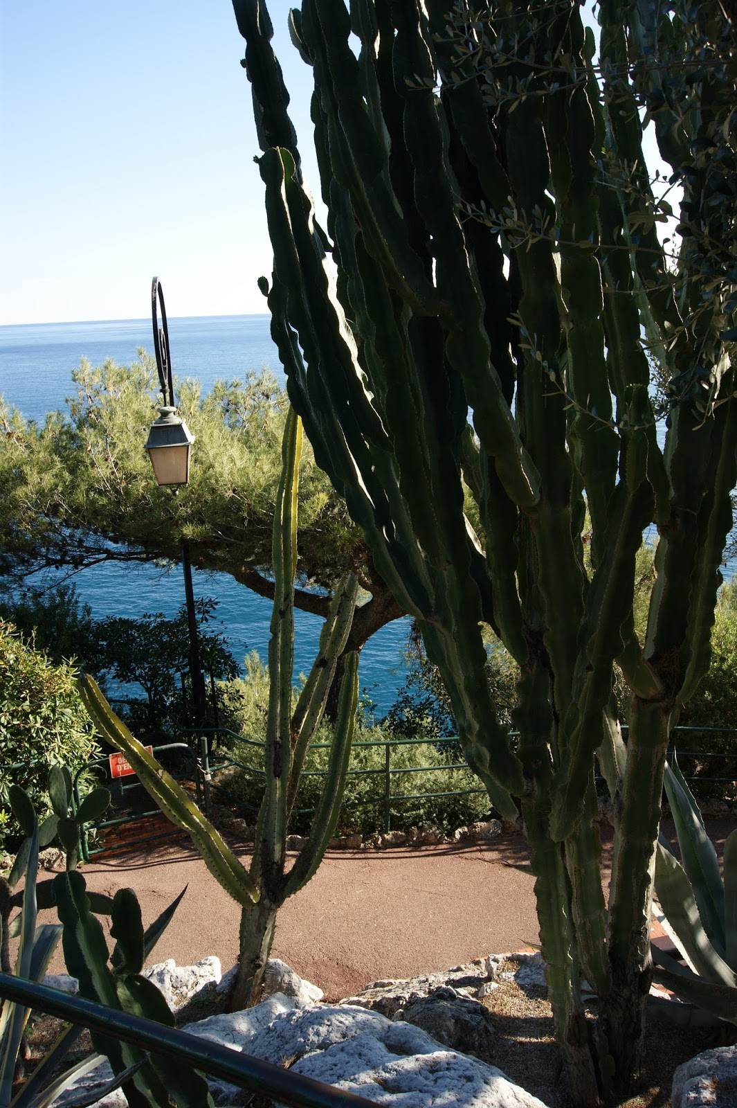 Succulent sundae monaco jardin exotique part 3 for Jardin exotique