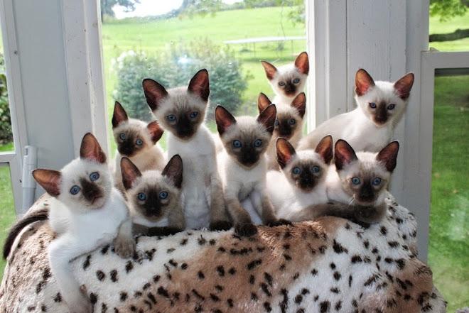 2013  kittens