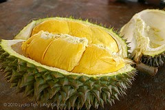 http://informasikankerservik.blogspot.com/2014/09/fakta-dan-mitos-durian-pada-kesehatan-tubuh.html