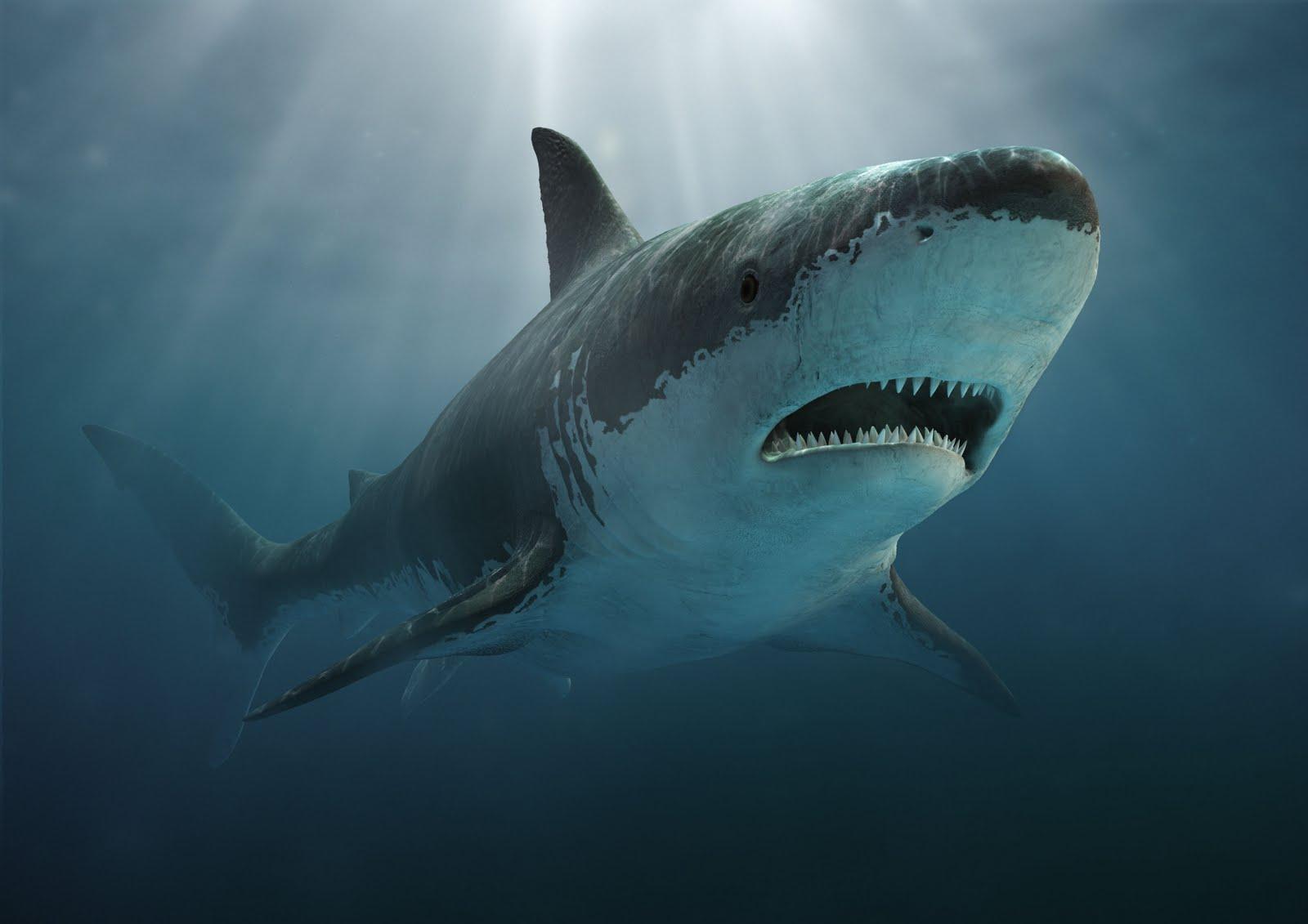 Q Significa Shark Dinossauros: Megalodon