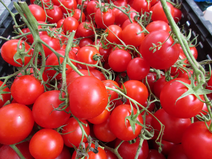 September 2015  (Stokes vine tomatoes)