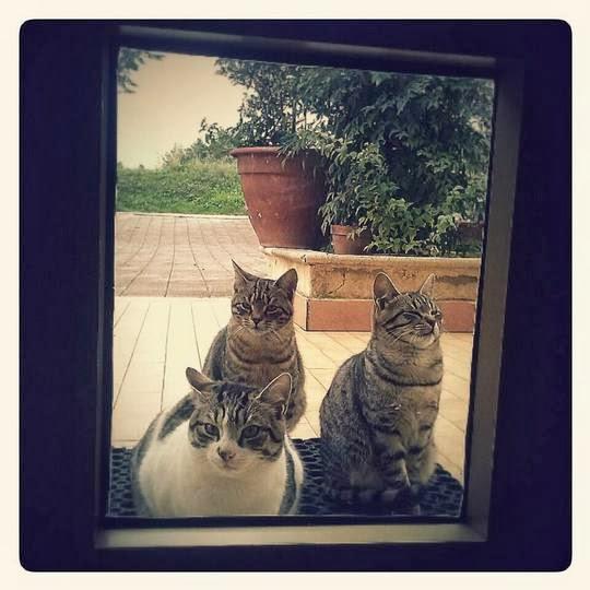 Cats of Matera Italy