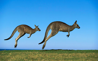 Kangaroo Jump Wallpaper 1920x1200