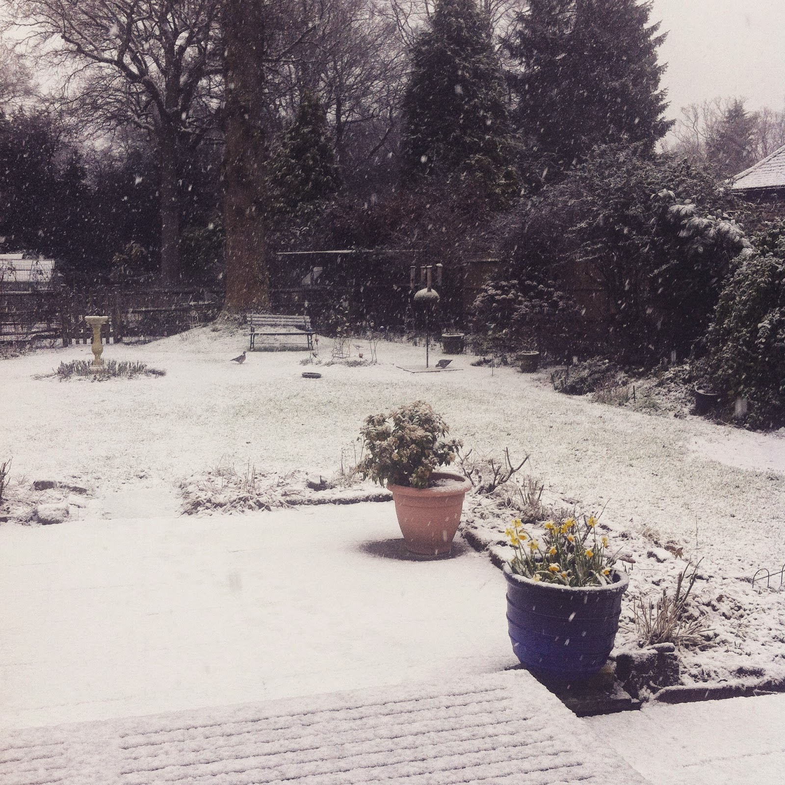 Snow South East 2015